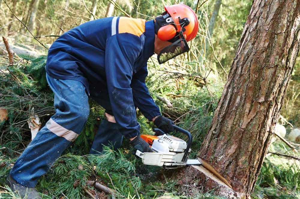 Dla naszych Klientów- Kiedy i jak zgodnie z prawem możemy wyciąć i przyciąć drzewo.