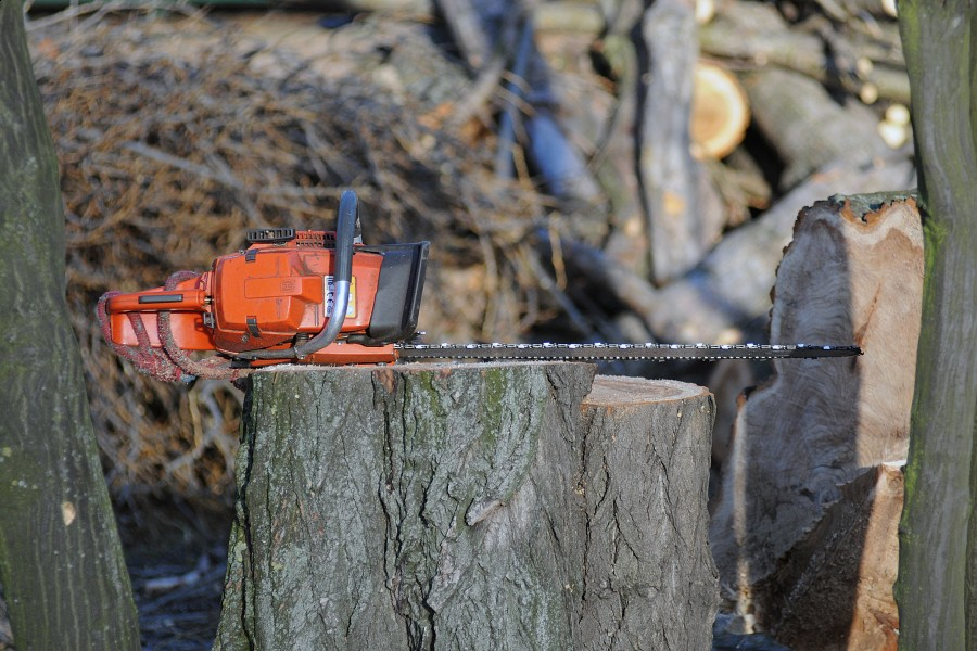 Wycinka drzew – zmiany w zezwoleniach!!